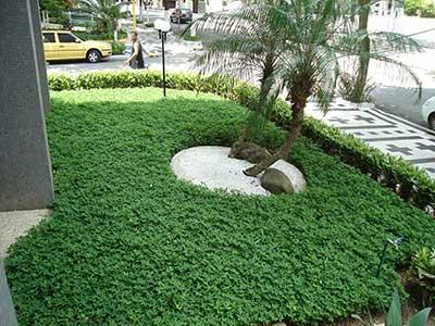 grama mais verde