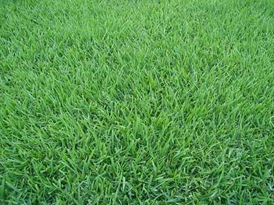Grama tapete verde