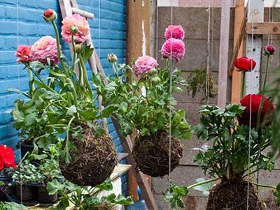 fotos de jardins suspensos