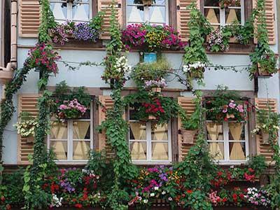 várias janelas