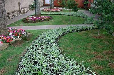 sugestões de plantas
