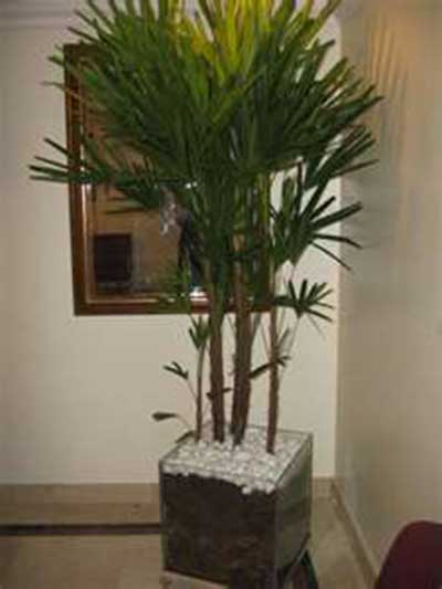 Decora o com plantas artificiais casa sala quarto fotos - Plantas artificiales para interiores ...