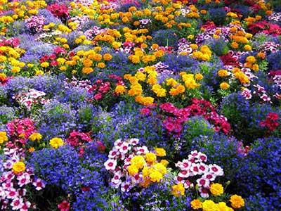 Flores Para Jardim 02 Pictures to pin on Pinterest