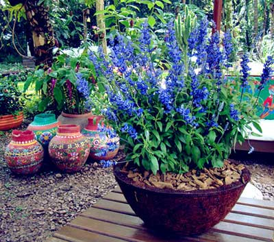 ideias para o seu jardim