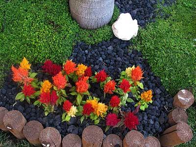 dicas de jardinismo