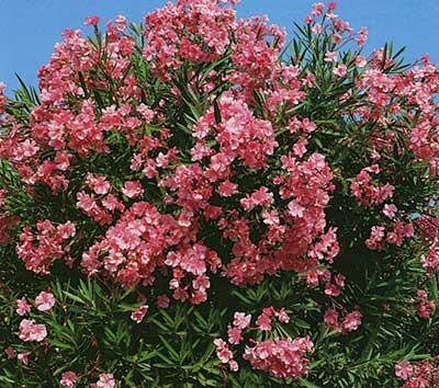 fotos de plantas para jardins