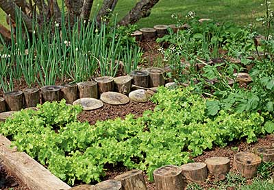 fotos de hortas