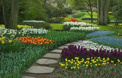 dicas de plantas para jardins