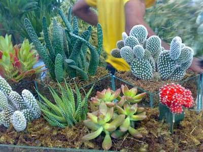 cactos e plantas desertas