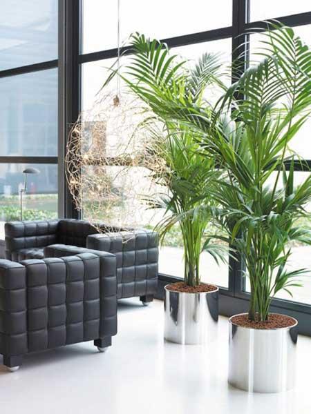 dicas de plantas artificiais para salas