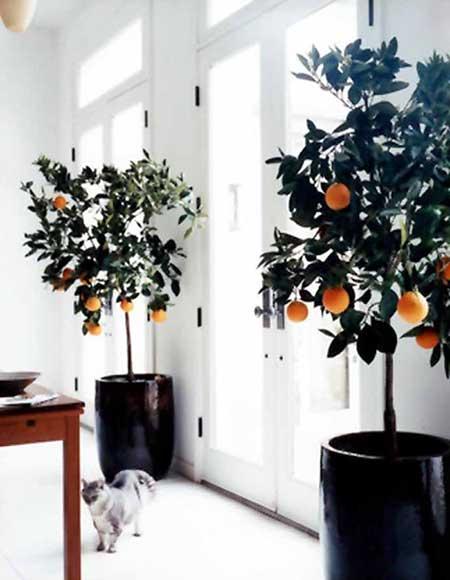 plantas decoradas