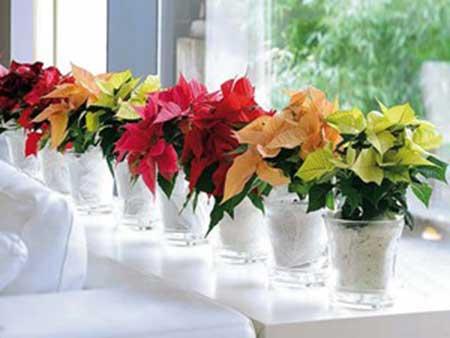 vasos com flores