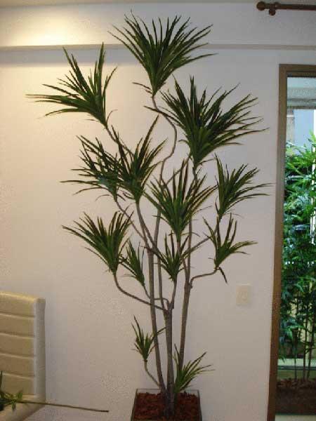 modelos de plantas artificiais para salas