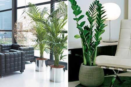 25 dicas de plantas artificiais para salas de estar e de - Plantas grandes para interiores ...