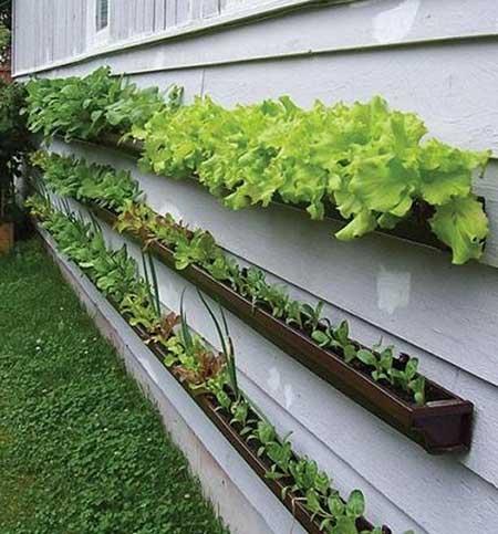 Como Fazer Um Jardim Barato E F 225 Cil Em Casa