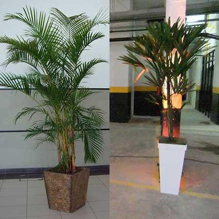 Como usar plantas artificiais na decora o fotos e dicas - Plantas grandes de interior resistentes ...